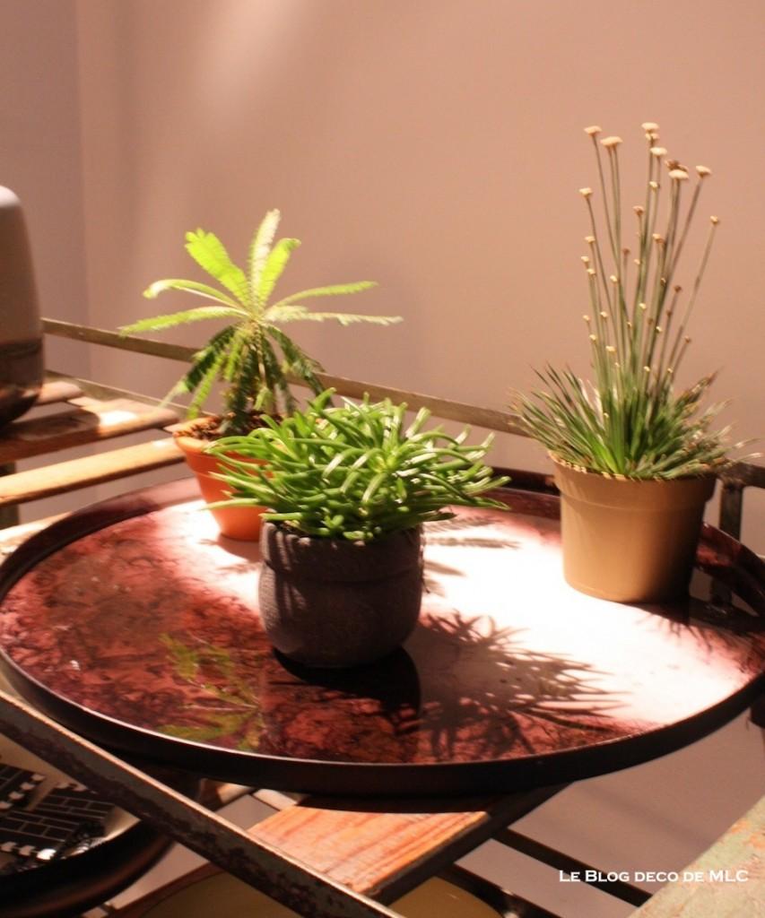 bo concept plateau et plante verte