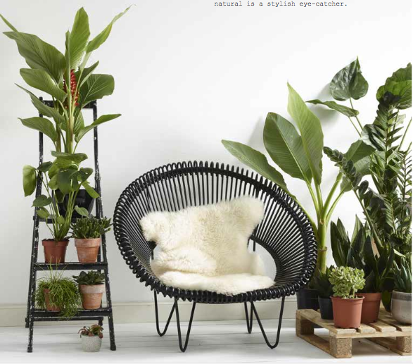 Urban jungle plante verte d 39 int rieur et cache pot d co for Pot de decoration interieur