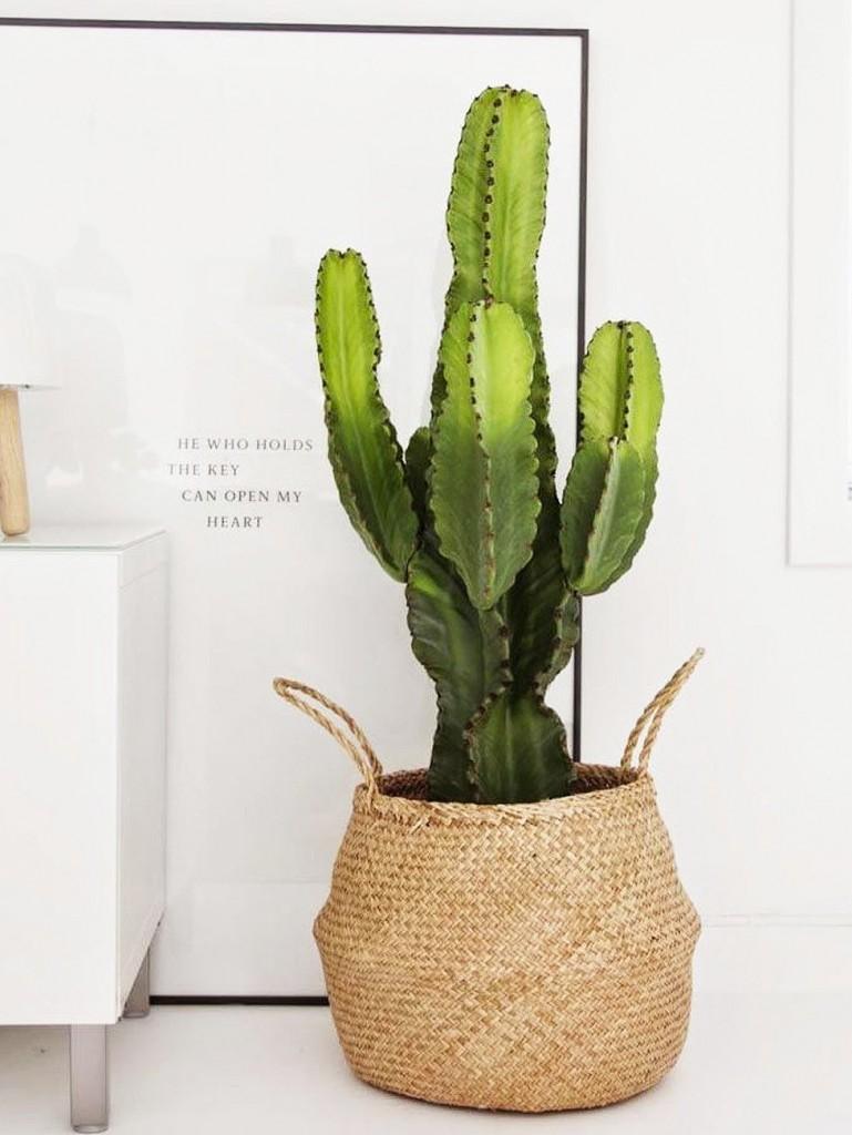 urban jungle plante verte d 39 int rieur et cache pot d co. Black Bedroom Furniture Sets. Home Design Ideas